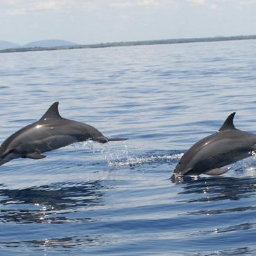 Dolphin & Snorkeling Cruise