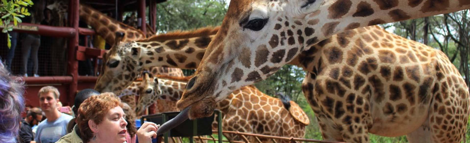 Karen Blixen Museum Giraffe Center and Kazuri Beads
