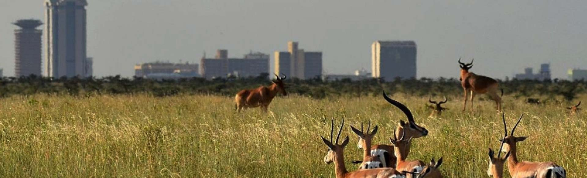 Nairobi National Park One Day Safari