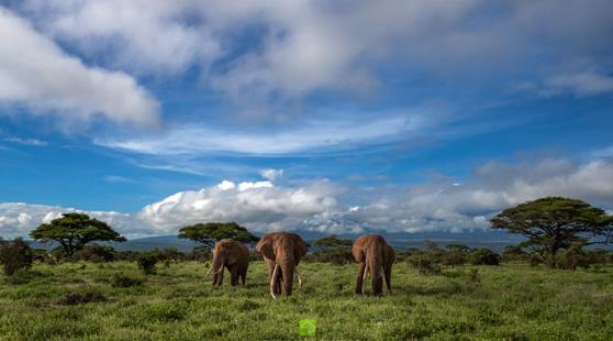 Amboseli & Lake Nakuru & Masai Mara Safari