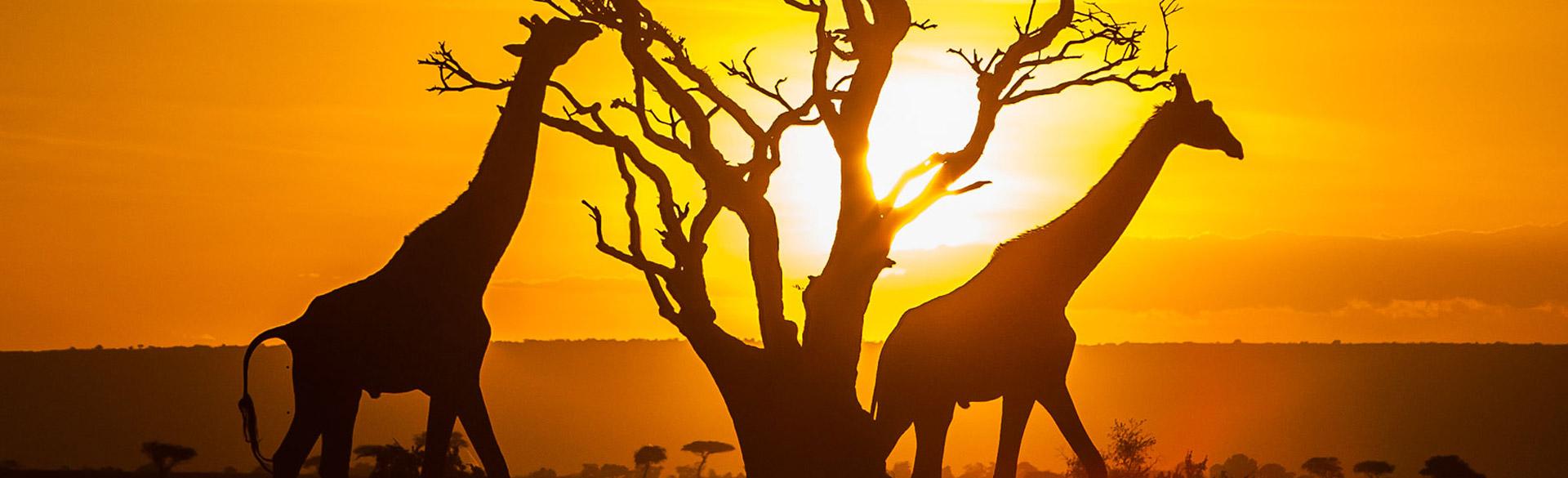 Kenya Itineraries
