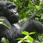 Primates & Wildlife Safari
