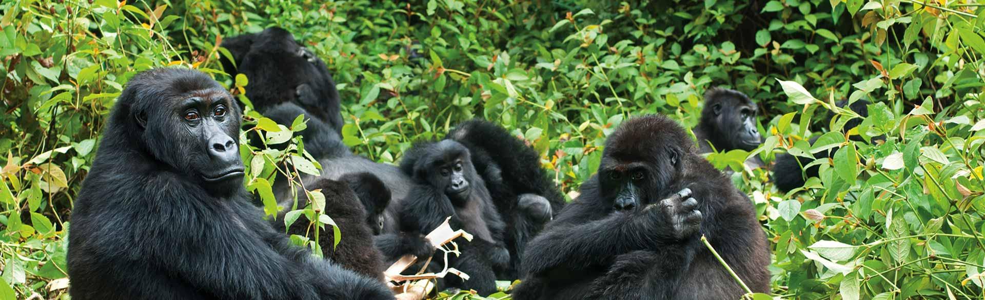 Rwanda Experience