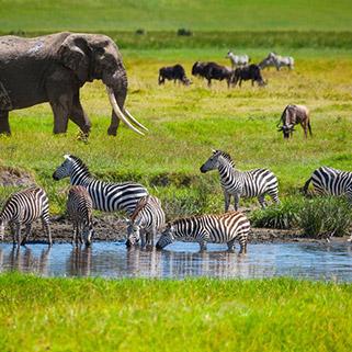 Exclusive Luxury Safari